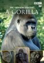- BBC Vadvilág sorozat - A gorilla - DVD