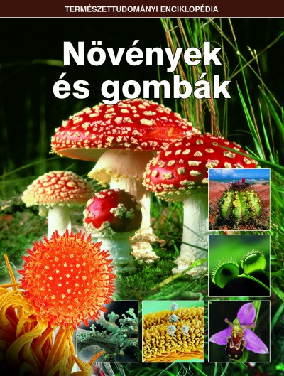 - Növények és gombák